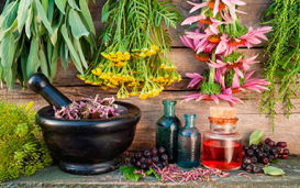 Самые лучшие травы и сборы для лечения простатита