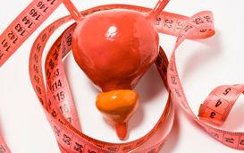 Размеры и объем простаты: норма по возрастам