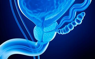 Что такое простата у мужчин: функции и ее строение