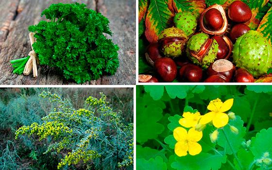Растения, помогающие бороться с простатитом