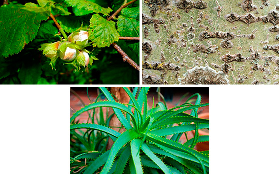 Растения для борьбы с простатитом